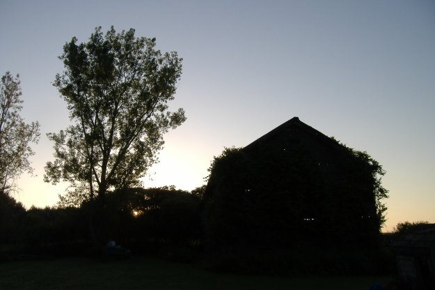 Barn & Cottonwood At Sunrise