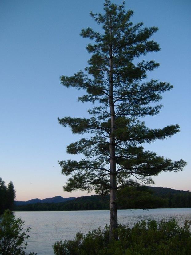 Ryan's Lone Pine
